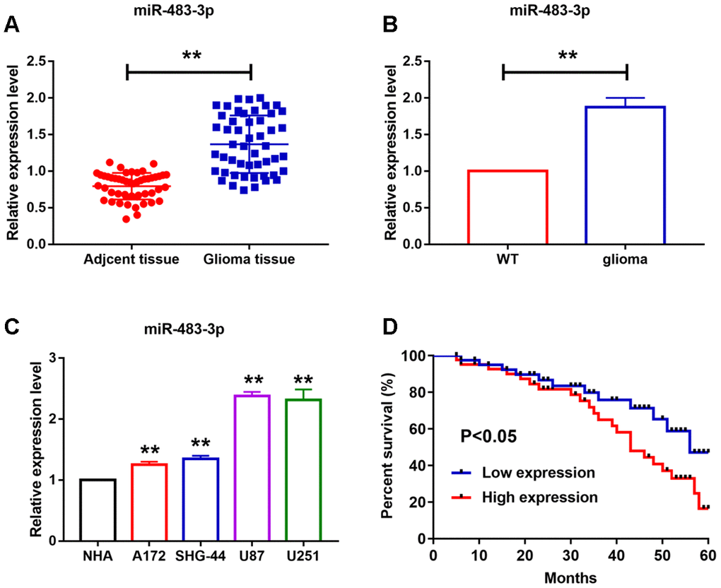MiR-483-3p levels in different glioma cell lines and in glioma tissue of human and mice. (A–C) qRT-PCR analysis showed upregulation of miR-483-3p in cancer tissues and different cancer cell lines. Data are mean ± SEM; Two-tailed t test was used for the statistical analysis. n= 50 glioma patients or 6 mice per group or 5 independent cell cultures. (D) The 5-year survival rate of high and low miR-483-3p level patients. Data are mean ± SEM; Two-tailed t test was used for the statistical analysis. **P