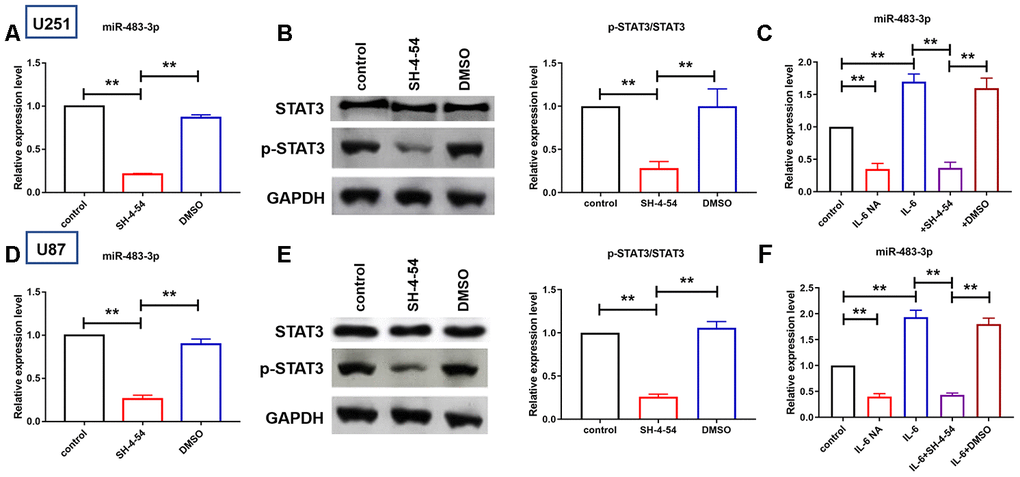 IL6/STAT3 axis activation increased miR-483-3p expression. (A, D) qRT-PCR analysis showed the expression level of miR-483-3p in U251 and U87 cells after treatment of STAT3 phosphorylation inhibitor. Data are mean ± SEM; one-way ANOVA was used for the statistical analysis. n=5 independent cell cultures. (B, E) Western bolt analysis showed protein levels of p-STAT3 and total STAT3 in U251 and U87 cells. Data are mean ± SEM; one-way ANOVA was used for the statistical analysis. n=5 independent cell cultures. (C, F) qRT-PCR analysis showed the expression level of miR-483-3p in U251 and U87 cells after IL-6 overexpression and neutralization and STAT3 inhibition. Data are mean ± SEM; one-way ANOVA was used for the statistical analysis. n=5 independent cell cultures. **P