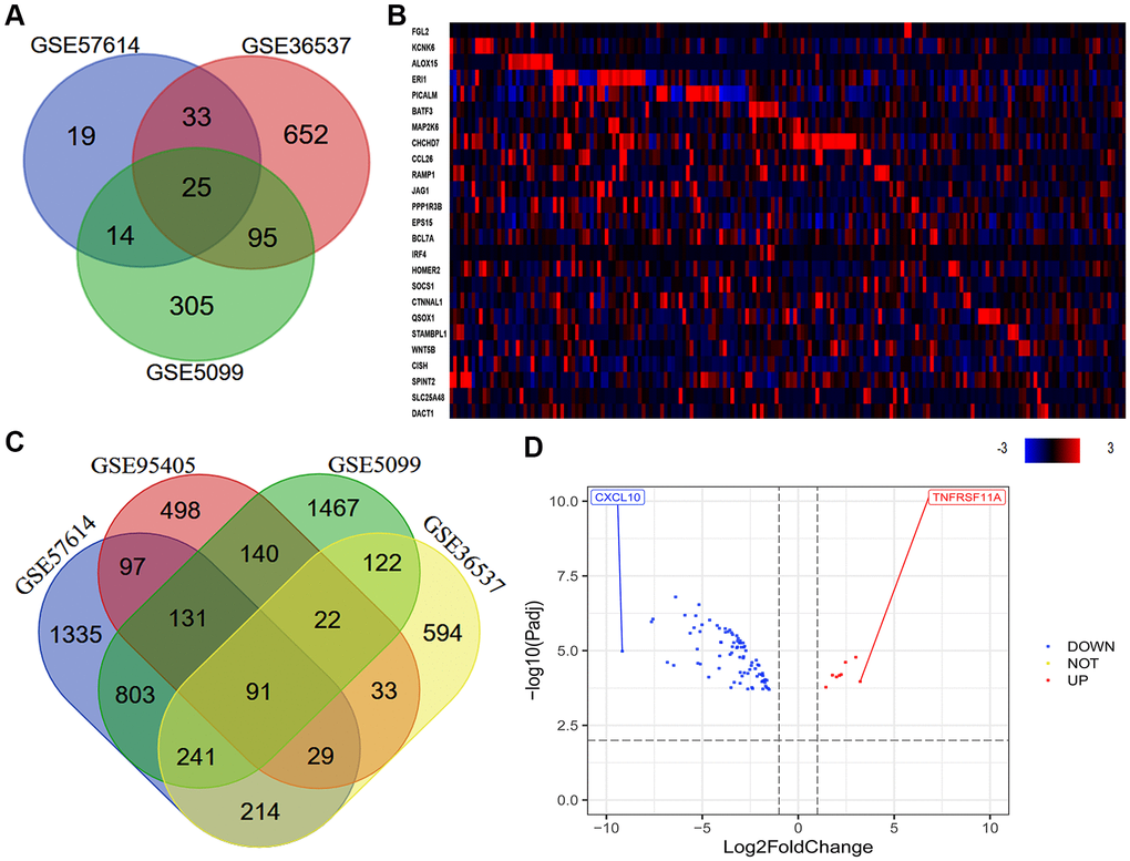 Quantitative analysis of DEGs between macrophages of different phenotypes. (A) In total, 25 consistently DEGs between M0 macrophages and M2 macrophages were identified in three datasets (GSE57614, GSE36537 and GSE5099) based on a |logFC| ≥ 1.0 and an adjusted P-value B) In total, 91 consistently DEGs between M1 and M2 macrophages were identified in four datasets (GSE57614, GSE36537, GSE5099 and GSE95405) based on a |logFC| ≥ 1.0 and an adjusted P-value C) The levels of the 25 consistently DEGs in ESCA samples from TCGA (tumor = 184) are shown as a heatmap, as quantified using cBioPortal. High, medium and low gene levels are represented in red, black and blue, respectively. (D) Volcano plot of the 91 consistently DEGs between M1 and M2 macrophages. The red spots represent the 8 upregulated genes and the blue spots indicate the 83 downregulated genes in M2 macrophages compared with M1 macrophages.