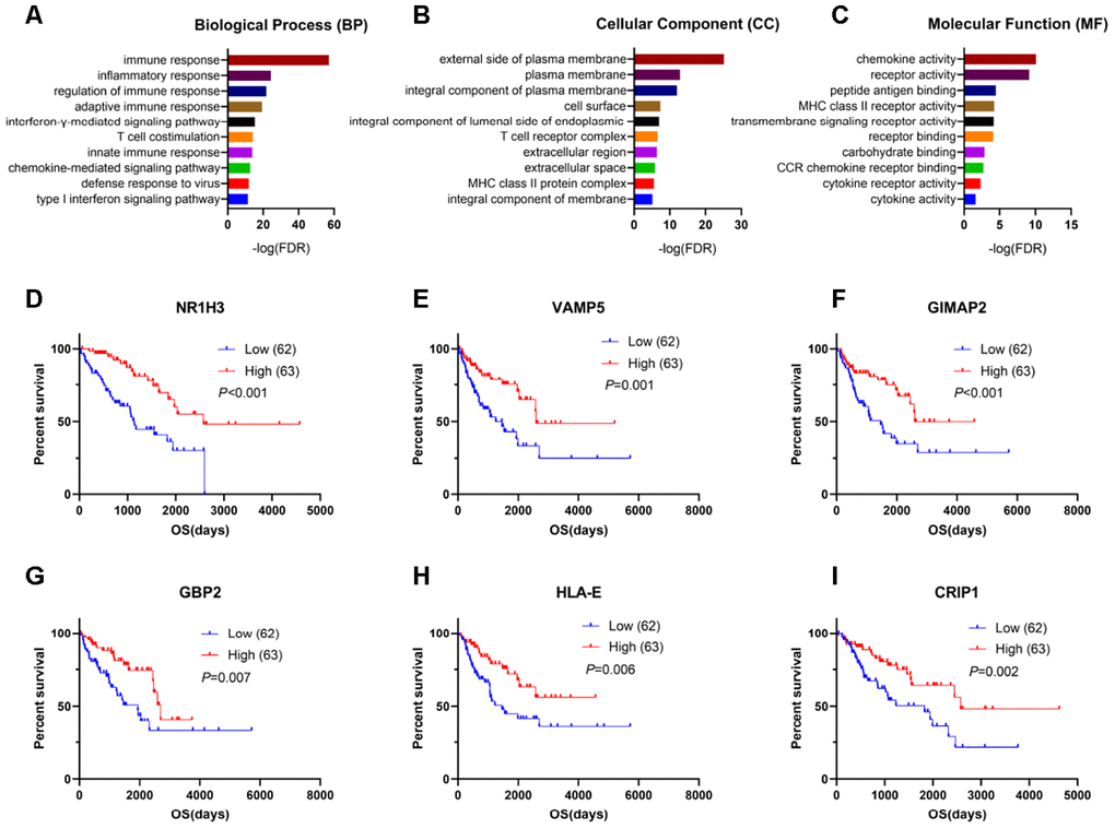 Genes for survival prediction among sarcoma patients. (A–C) Enrichment analysis of good survival-related genes among sarcoma patients. (D–I) The Kaplan-Meier survival curves for sarcoma patients further separated into the high and low expression groups based on the quartiles of the NR1H3, VAMP5, GIMAP2, GBP2, HLA-E and CRIP1 mRNA levels, separately.