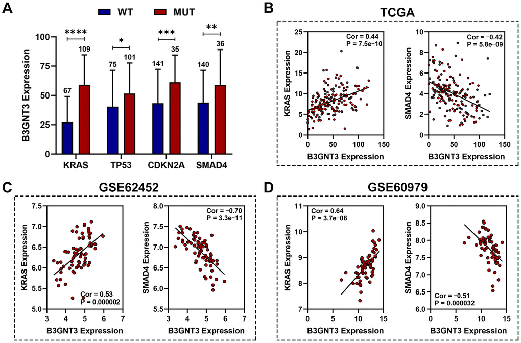 Association between B3GNT3 expression and somatic mutations. (A) KRAS, TP53, CDKN2A, and SMAD4 mutation status were significantly associated with higher expression of B3GNT3. (B–D) Correlation analysis of KRAS, SMAD4, and B3GNT3. PC, pancreatic cancer; TCGA, the Cancer Genome Atlas; WT: wild type; MUT: mutation. (*P value