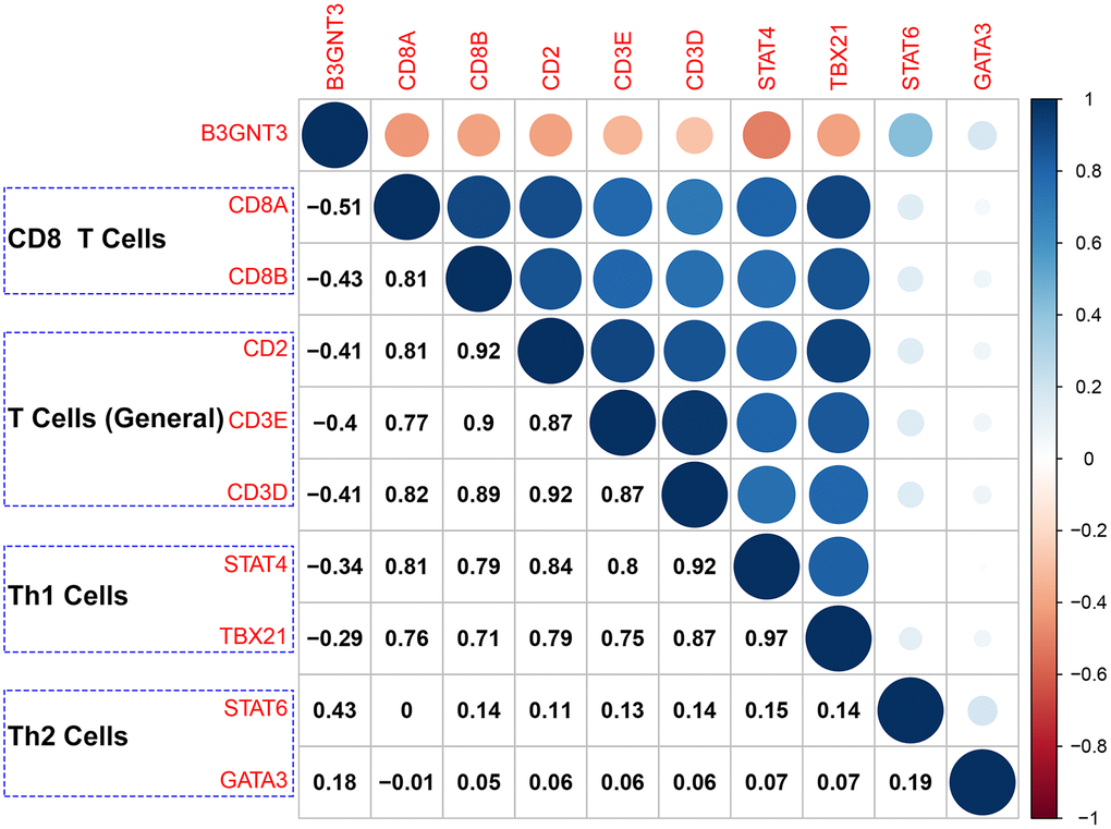Correlation analysis of B3GNT3 expression and the expression of marker genes of CD8+ T cells (CD8A and CD8B), T cells (general) (CD2, CD3D, and CD3E), Th1 cells (STAT4 and TBX21), and Th2 cells (STAT6 and GATA3). Th1 cells: Type-1 T helper cells; Th2 cells: Type-2 T helper cells.