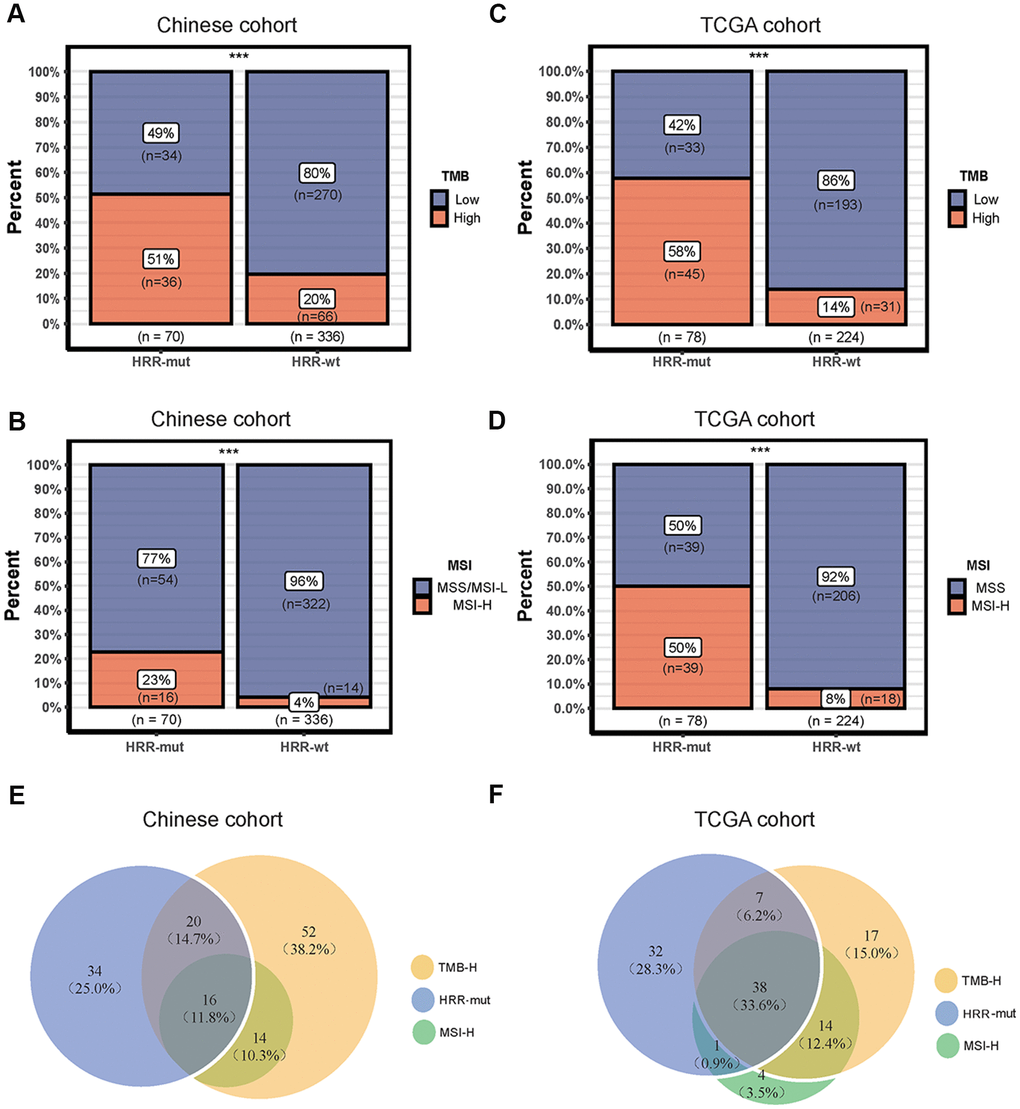 Associations among mutations in HRR genes, TMB and the MSI status. (A–C) Bar plots showing the percentage of TMB-high patients in the HRR-mut group compared with the HRR-wt group in the Chinese (A) and TCGA (C) cohorts. (B–D) Bar plots showing the percentage of MSI-H patients in the HRR-mut group compared with the HRR-wt group in the Chinese (B) and TCGA (D) cohorts. Comparisons between the groups were performed with Fisher's exact test (* P P P P > 0.05). (E, F) Venn diagrams illustrating the overlap between patients with HRR-mut, TMB-H, and MSI-H COAD in the Chinese (E) and TCGA (F) cohorts.