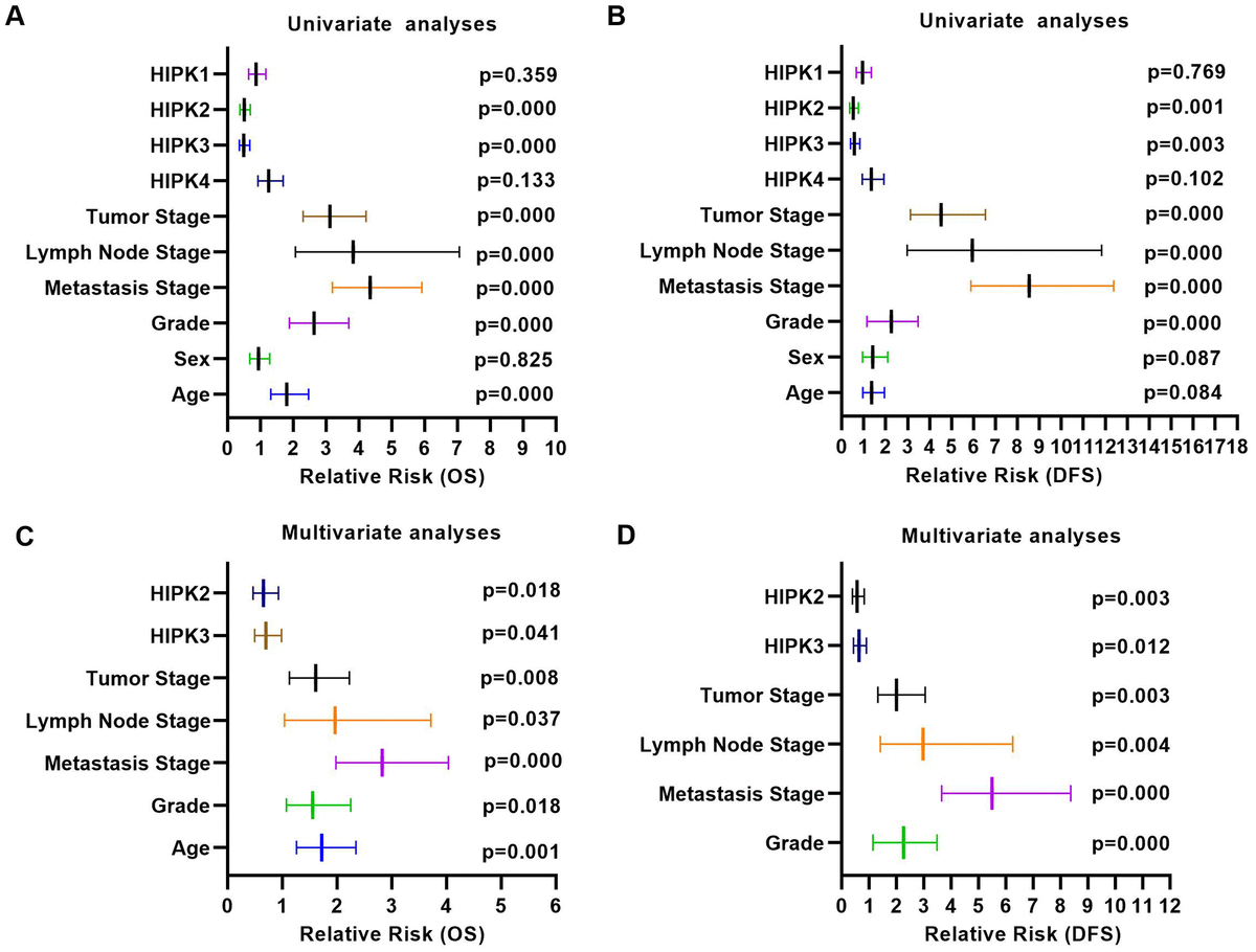Univariate analysis and multivariate analysis results of ccRCC with HIPKs expression. (A) Univariate analysis showed that HIPK2 and HIPK3 were related to OS and DFS. (A) Multivariate analysis showed that HIPK2 and HIPK3 were related to OS and DFS. HIPK, Homeodomain interacting protein kinases.