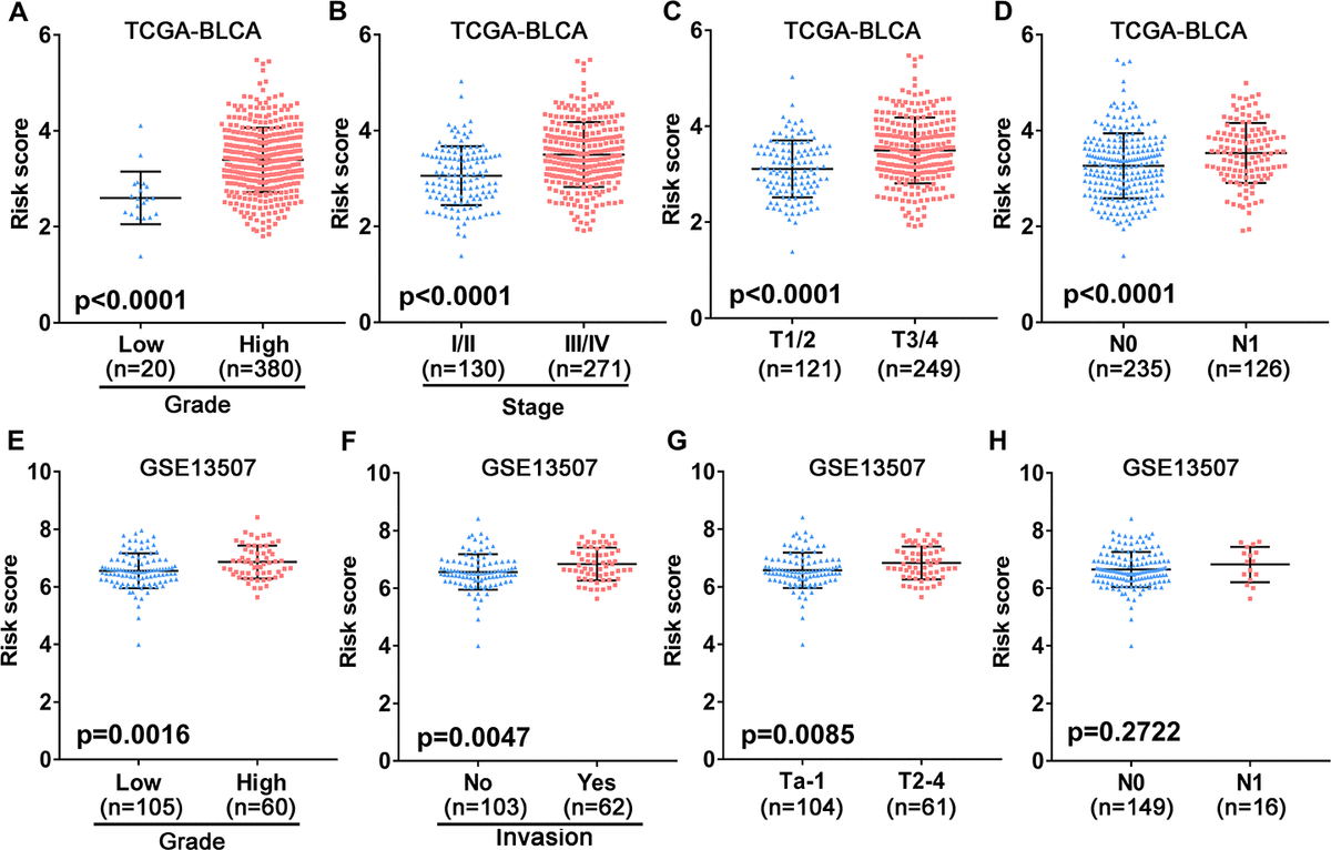Association between the 10-gene risk model and clinicopathological factors. (A–D) Correlation of the risk score and clinicopathological factors including (A) grade, (B) clinical stage, (C) T stage, (D) N stage in the TCGA-BLCA patient cohort. (E–H) Association between the risk score and clinicopathological features including (E) histological grade, (F) invasive status, (G) T stage and (H) N stage in the GEO UBC patient cohort.