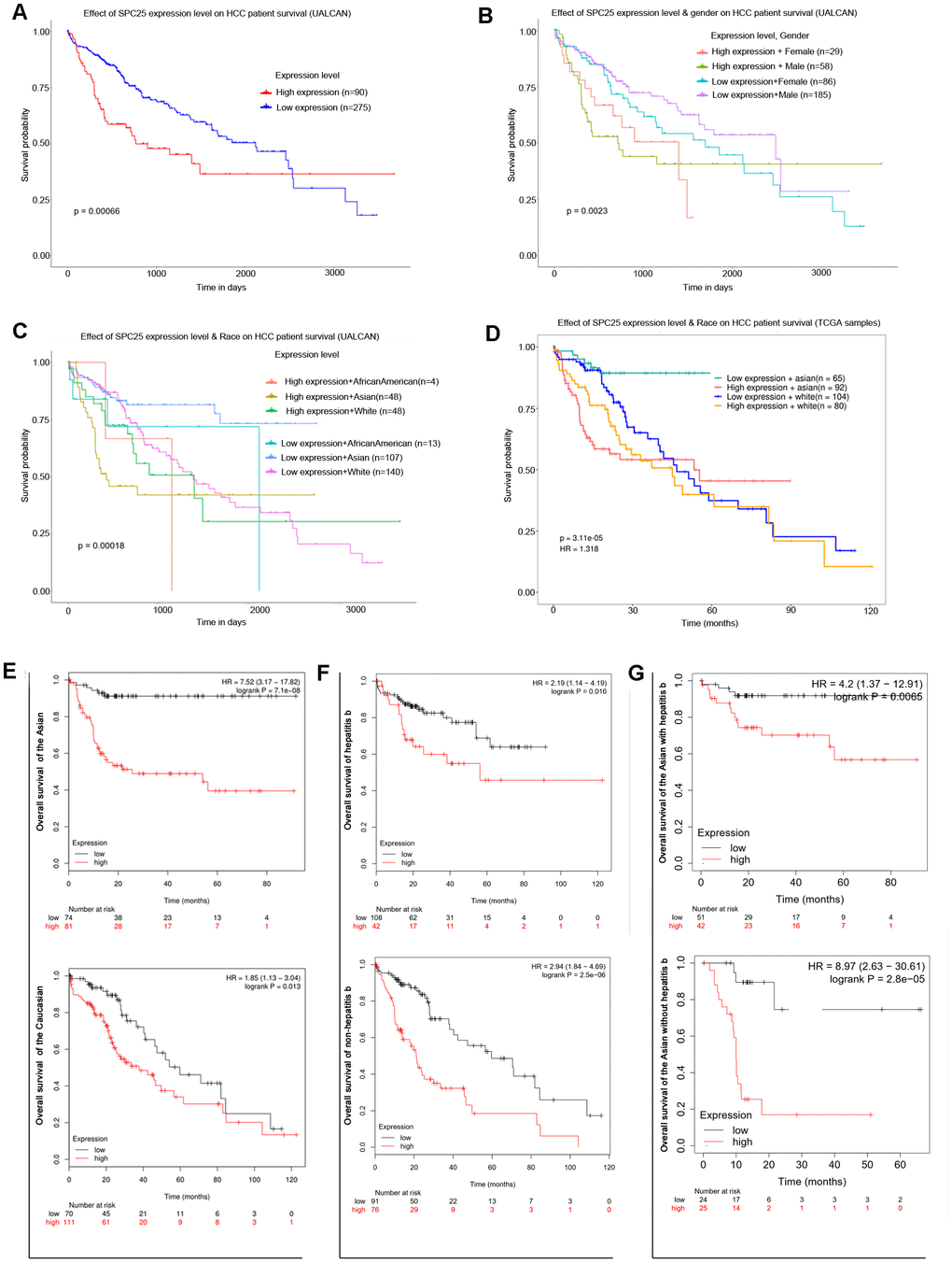 Prognostic role of SPC25 mRNA in HCC patients. (A) Effect of SPC25 expression level on HCC patient survival (UALCAN). (B) Effect of SPC25 expression level and gender on HCC patient survival (UALCAN). (C) Effect of SPC25 expression level and Race on HCC patient survival (UALCAN). (D) Effect of SPC25 expression level and Race on HCC patient survival (TCGA samples). (E) Subgroup overall survival analysis of SPC25 mRNA level in Asian or Caucasian HCC patients. (F) Subgroup overall survival analysis of SPC25 mRNA level in HCC patients with or without hepatitis b. (G) Subgroup overall survival analysis of SPC25 mRNA level in Asian HCC patients with or without hepatitis b.
