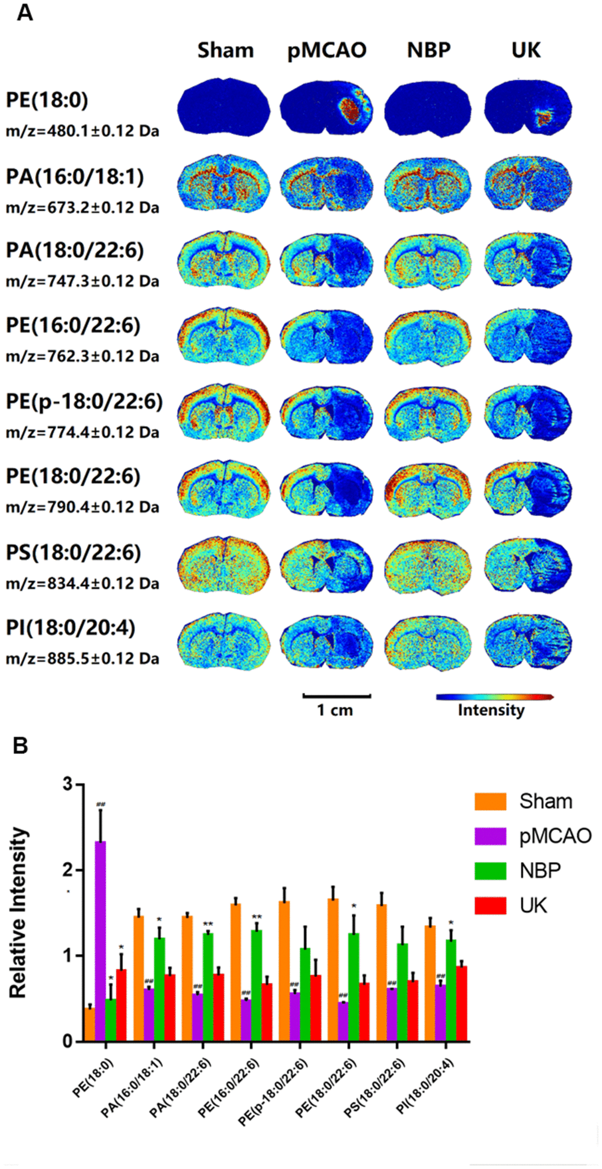 Changes in phospholipid levels in the brains of rats with pMCAO. (A) In situ MALDI-TOF MSI of phosphatidylethanolamine (PE) (18:0), phosphatidic acid (PA) (16:0/18:1), PA (18:0/22:6), PE (16:0/22:6), PE (p-18:0/22:6), PE (18:0/22:6), phosphatidylserine (PS) (18:0/22:6) and phosphatidylinositol (PI) (18:0/20:4). The spatial resolution was set to 100 μm. Scale bar = 1 cm. (B) Statistical analysis of the relative intensities of the phospholipids mentioned above. Values were normalized to those in the left brain where there was no ischemia. The data are presented as the mean ± SD, n = 3, and were assessed using one-way ANOVA. ## P P P