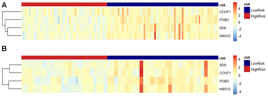 Predicted DNA methylation marker heat map of PDAC patients based on risk scores tested in the training cohort and validation cohort. (A) In the training data set, the relative gene expression level of the four DNA methylation genes in the prediction model based on the risk score is displayed in the form of a heat map. Each column represents a single patient in the combined verification cohort, ranked according to the predictor score, with the lowest score. Each row represents a gene in the model, sorted by gene's contribution to the score. Blue represents low risk, red represents high risk. (B) Same as above, perform the same operation in the verification data set for verification.