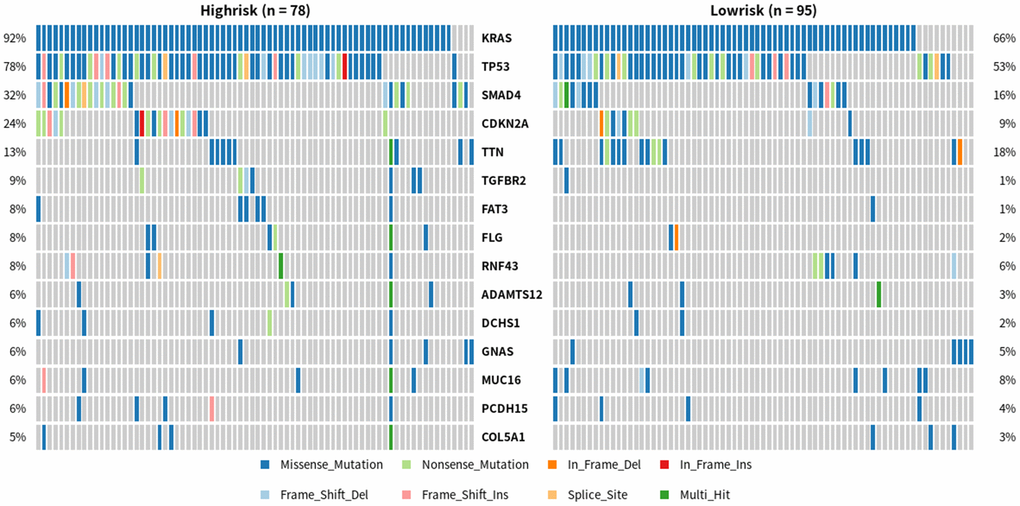 Differences in gene mutations between high-risk and low-risk PDAC patients. One row represents a gene, and the top 15 is intercepted from it; One column is a sample, high risk group (n=78), low risk group (n=95). Different colors represent different types of mutations.