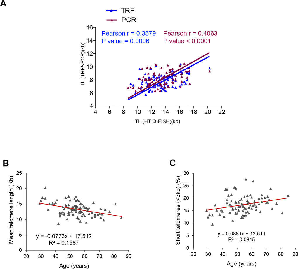Correlation between HT Q-FISH and PCR and TRF techniques for telomere length measurements. (A) Correlation of telomere length measured by TRF, qPCR and HT Q-FISH in Peripheral blood mononuclear cell (PMBC) samples from 89 individuals. (B, C) Linear regression analysis was used to determine the rate of telomere shortening (B) and the rate of the increase of short telomeres (C) per year in PMBCs. The telomere length data in (B, C) correspond to HT-qFish analysis. The Pearson correlation coefficient and linear regression equation were determined using GraphPad Software.