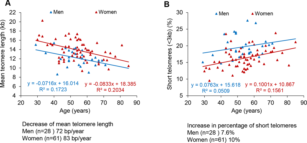Telomere shortening and of increase in short telomeres with age in men and women. (A, B) Percentage of short telomeres (A) and percent of short telomeres (B) in PMBCs from male (blue) and female (red) patients. Linear regression analysis was used to assess the rate of telomere shortening expressed as number of bp loss and the increase of the percentage of short telomeres per year.
