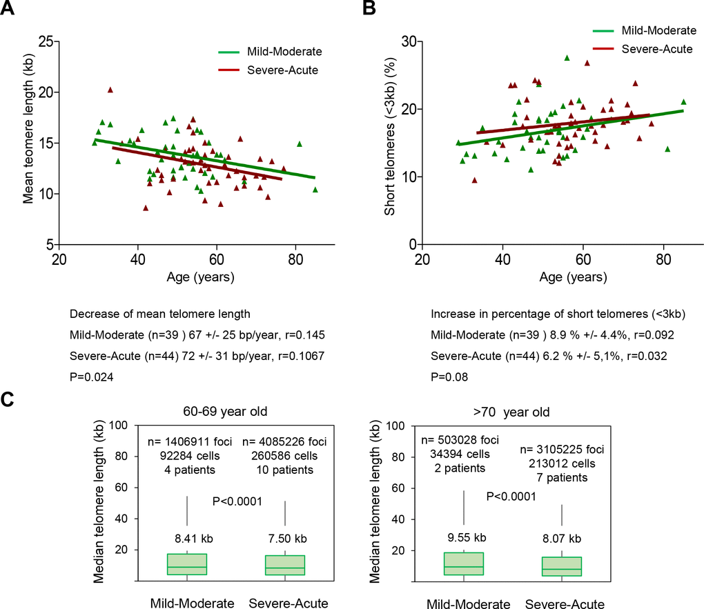 Patients with a higher COVID-19 severity score show faster telomere shortening rates. (A, B) Telomere shortening (A) and increase in percent of short telomeres (B) with age in patients diagnosed with mild-moderate and severe-acute COVID-19. Linear regression analysis was used to assess the number of bp loss and of the percent of short telomeres per year (C) Whisker plot representation of telomere length. The between 60-69 and older than 70-year-old were pooled together within the same age group. The patients diagnosed with mild or moderate and those diagnosed with severe or acute were grouped. The telomere length corresponding to individual telomere foci were plotted according to Covid-19 severity groups. The ends of the box are the upper and lower quartiles so that the box spans the interquartile range. The middle line represents the median and bars to standard deviation. The statistical significance was calculated by one way Anova with post tukey test. n= number of foci.
